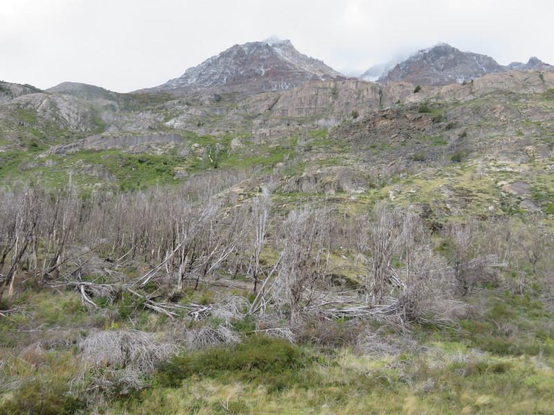 Landschaft des Torres del Paine Nationalparks